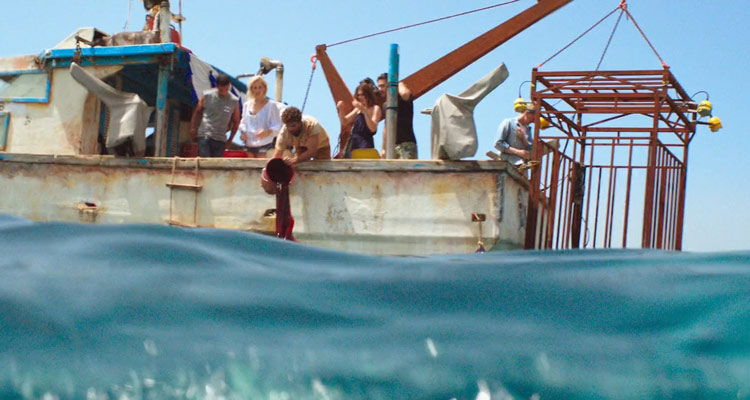 47 Meters Down 2017 Movie Chumming the waters for sharks