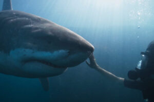 Deep Blue Sea 3 2020 Movie Tania Raymonde as Emma Collins touching the nose of the giant shark underwater scene